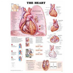 Chart of the Heart