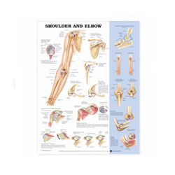 Chart of Shoulder and Elbow