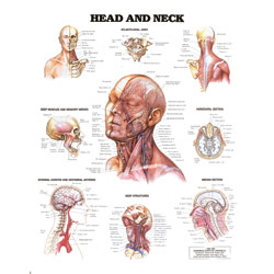 Chart of Head and Neck