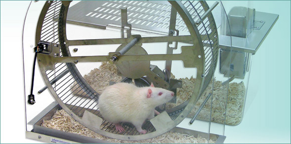 Rodent Activity Wheel System