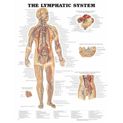 Chart of Lymphatic System