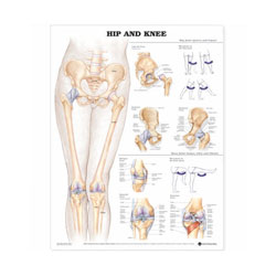 Chart of Hip and Knee