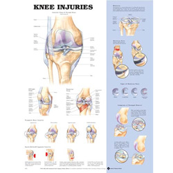 Chart of Knee Joint
